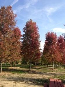 Arbor care inc (815)469-6061