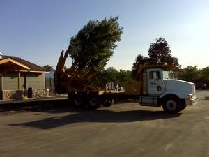 tree_moving-17