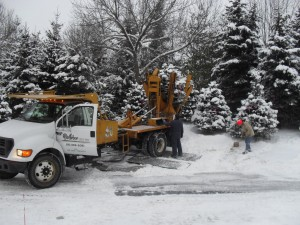 tree_moving-Marquette Bank (1)