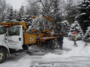 winter_tree_moving