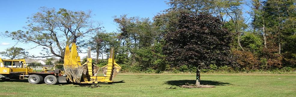 Big Tree Moving