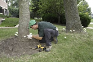 Tree injections
