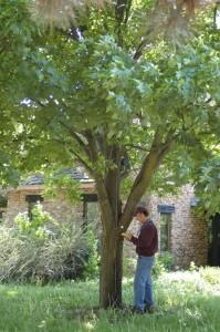 tree_inventories-3
