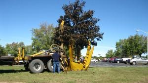 tree_moving-24