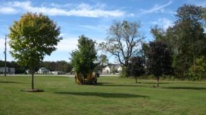 tree_moving-27