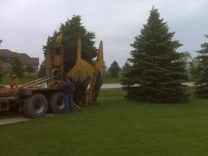tree_moving-29