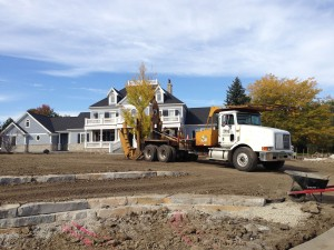 tree_moving-34