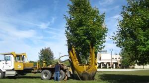 tree_moving-7