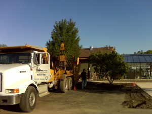 tree_moving-Park District