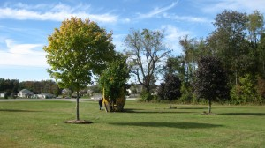 tree_moving-Purdue Sculpture Park