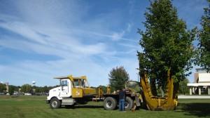 tree_moving-Purdue University (2)