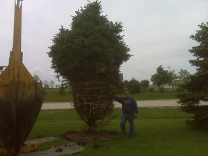 tree_moving-residential (2)