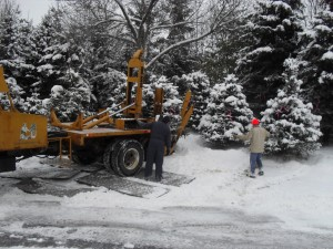 tree_moving-winter relocating
